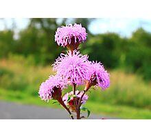 Hairy Purple Flower2 Photographic Print