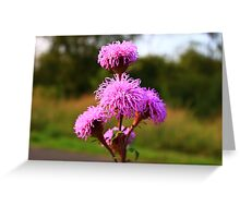 Hairy Purple Flower3 Greeting Card