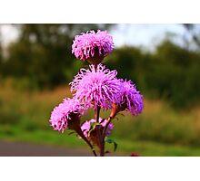 Hairy Purple Flower3 Photographic Print