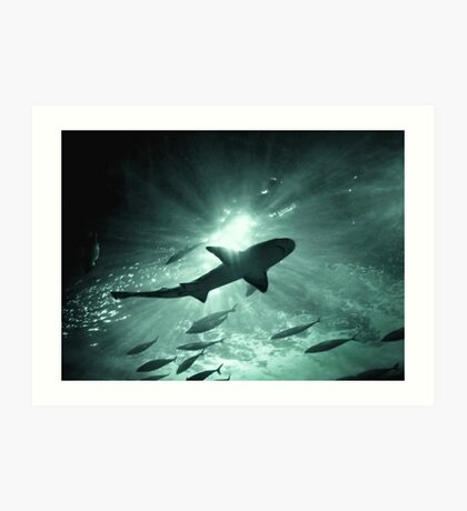 Aquarium Shark in the Spotlight Art Print