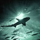 Aquarium Shark in the Spotlight by Ellen Cotton