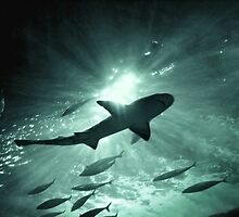 Aquarium Shark in the Spotlight by Ellen Cotton