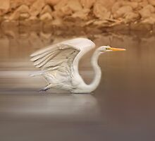 Great Egret by KatMagic Photography