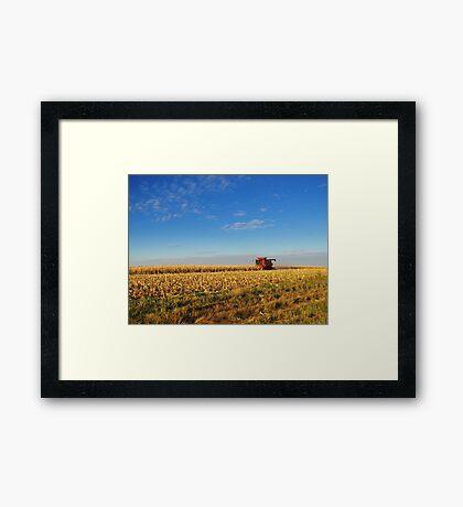 Evening Harvest Framed Print