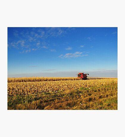 Evening Harvest Photographic Print