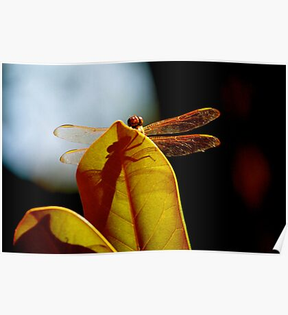Dragonfly Shadow Poster
