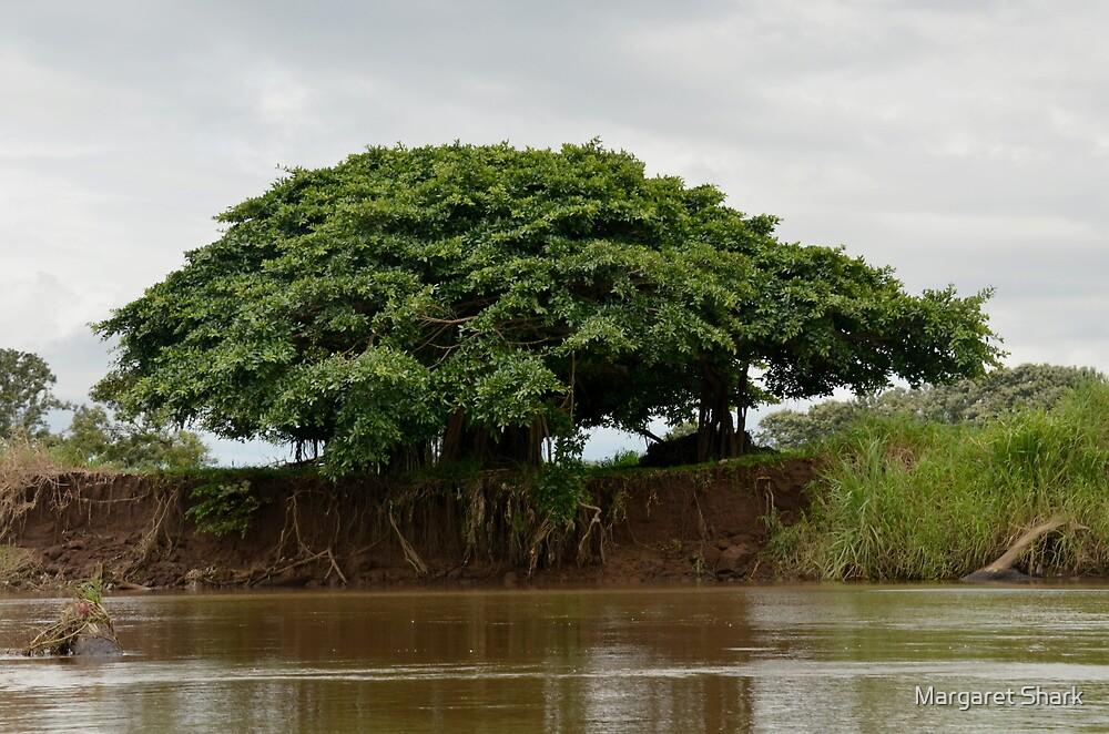 Large Tree by Margaret  Shark