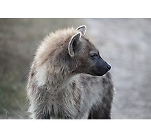 Hyena Searching Photographic Print