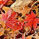 Autumn Harmony by Mary Fox