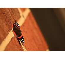 Butterfly on Brick Photographic Print