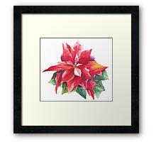 Bright Red Poinsettia Framed Print