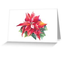 Bright Red Poinsettia Greeting Card