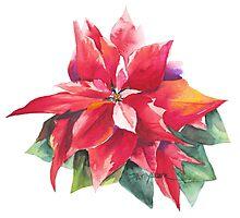 Bright Red Poinsettia Photographic Print