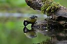 Thirsty by Peter Wiggerman