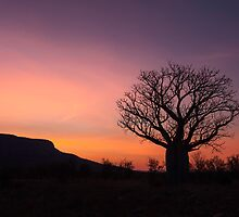 Boab Sunrise - The Kimberley, Western Australia by Kath Salier