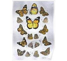 Butterfly study Poster