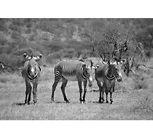 Grevy's Zebras at Samburu, Kenya Photographic Print