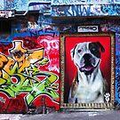 Graffiti Dog, Rutledge Lane by Roz McQuillan