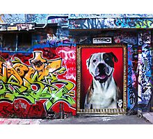 Graffiti Dog, Rutledge Lane Photographic Print