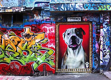Graffiti Dog, Rutledge Lane by Roz McQuillan