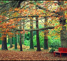 Red Bench in Autumn by kcy011