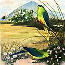 Orange Bellied Parrots by melhillswildart