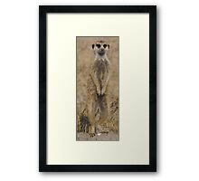 Meercat under Review Framed Print