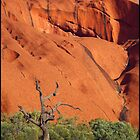 Old Dead Tree - Uluru by kcy011