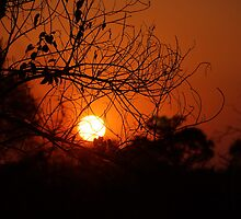 Okavango Sunset by SheryleMoon