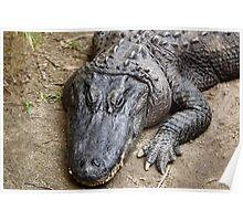 Allie Gator Poster