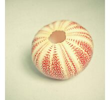 Sea Urchin Photographic Print