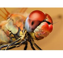 Dragonfly Photographic Print