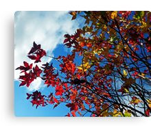 The leaves on the trees Canvas Print