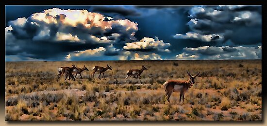 The Antelope by Richard  Gerhard