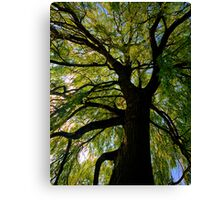 Tall and Strong Canvas Print
