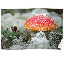 Fly Agaric - 2 Poster