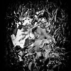 """Resting Leader"" (B&W) by Andreas Koerner"