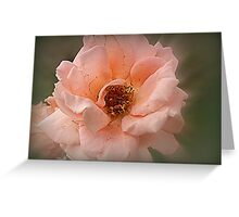 Late Glow Of Summer Greeting Card