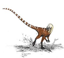 Sinosauropteryx  by Asher  Elbein