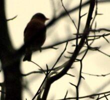 Bird in a Thorny Tree Sticker