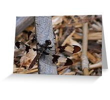 Lacy-winged Damselfly #1 Greeting Card