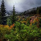 High In The Hills by Charles & Patricia   Harkins ~ Picture Oregon
