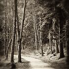 Along the Path by fraser68