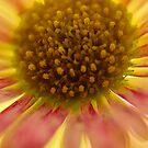 Flower Power by Johnathan Bellamy