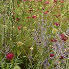 Go wild(flowers)! by Tibbs