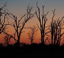 Stratified Sunset  by SheryleMoon