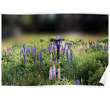 Birdhouse in Lupine Field Poster