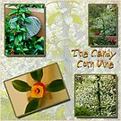 Candy Corn Vine Picture Story Board by Sandra Foster