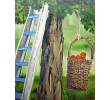 388 Apple Tree Photographic Print