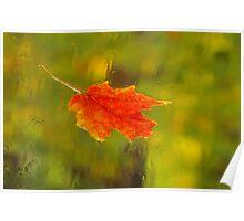 Leaf on Windshield Poster